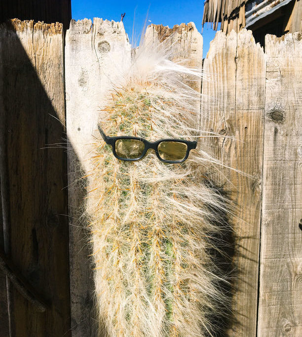 Kaktus mit Sonnenbrille